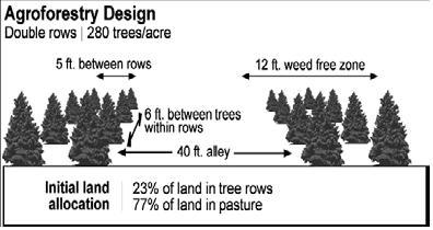 Agroforestry design