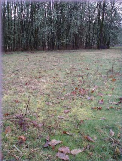 Closely spaced trees reduce the amount of forage produced