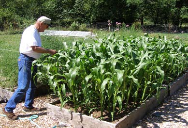 John Reill Shows How He Grows Corn In Raised Beds. Photo By Sam Angima